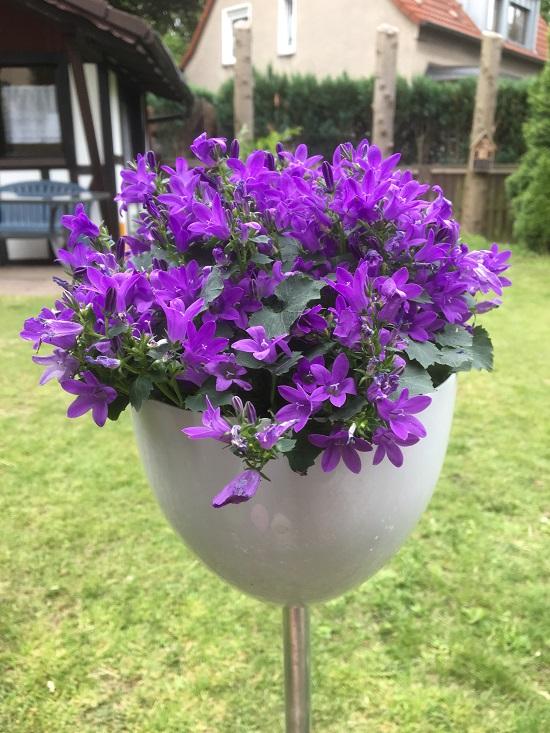 Skypot Scheurich in weiss mit lilafarbener Pflanze www.probenqueen.de